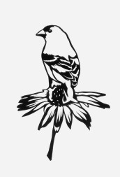 "Goldfinch on Coneflower, hand cut paper on paper, 7"" x 5"", Sold"